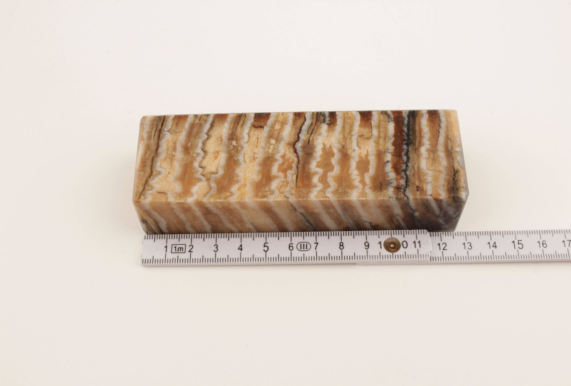 Beige-brown stabilized mammoth molar