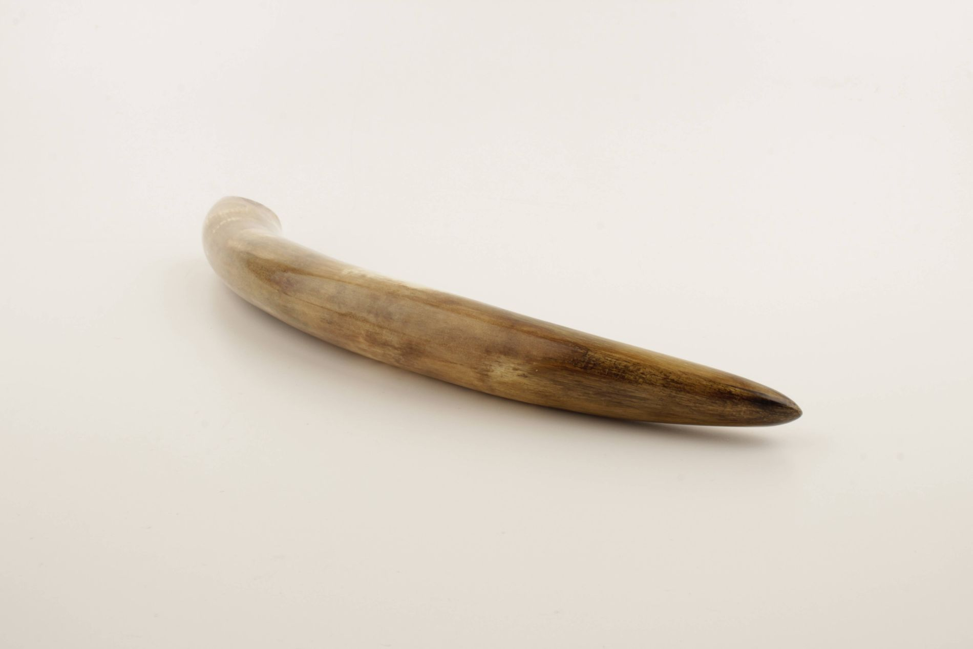 Restored woolly mammoth tusk