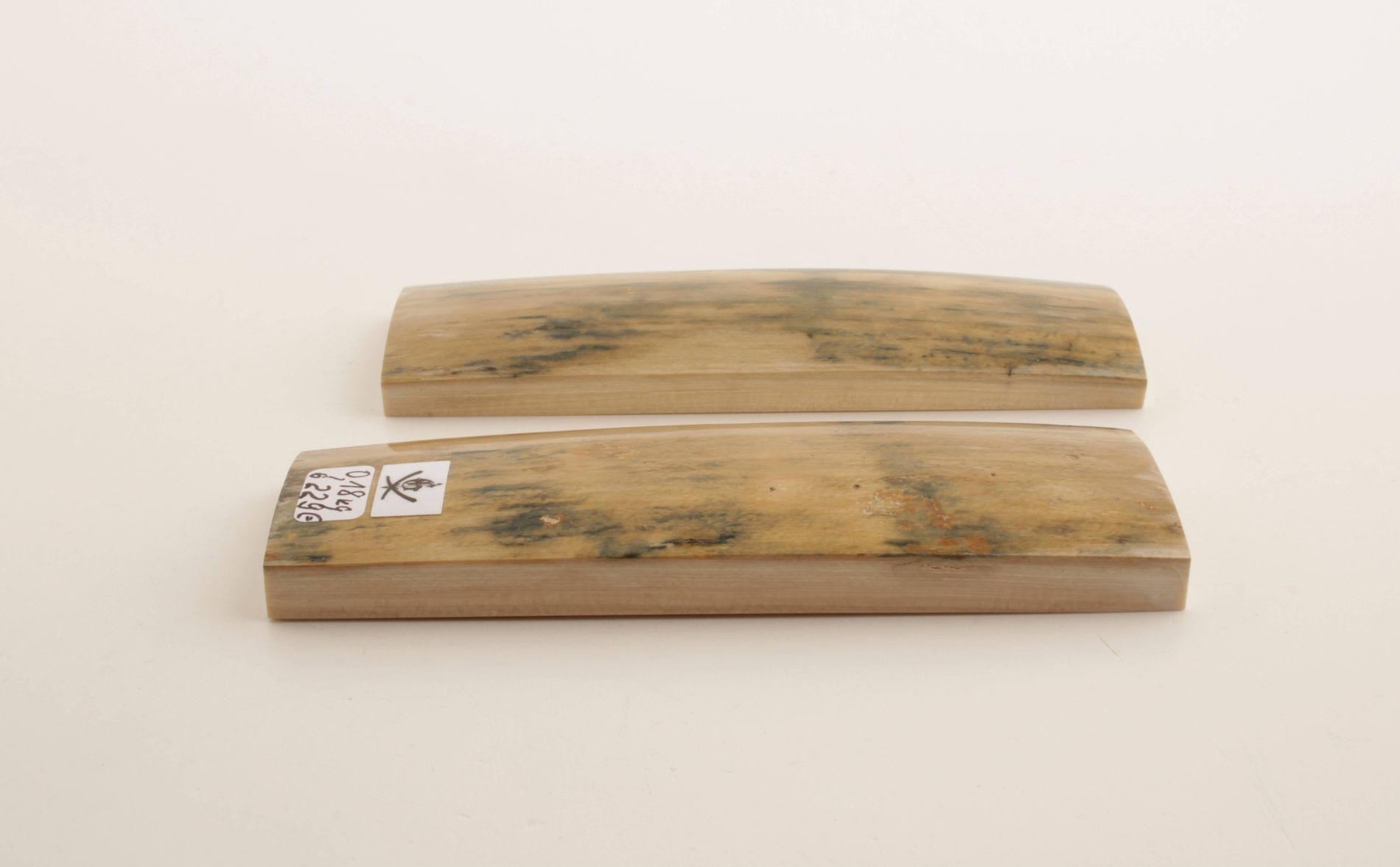 Beige-blue natural mammoth bark scales