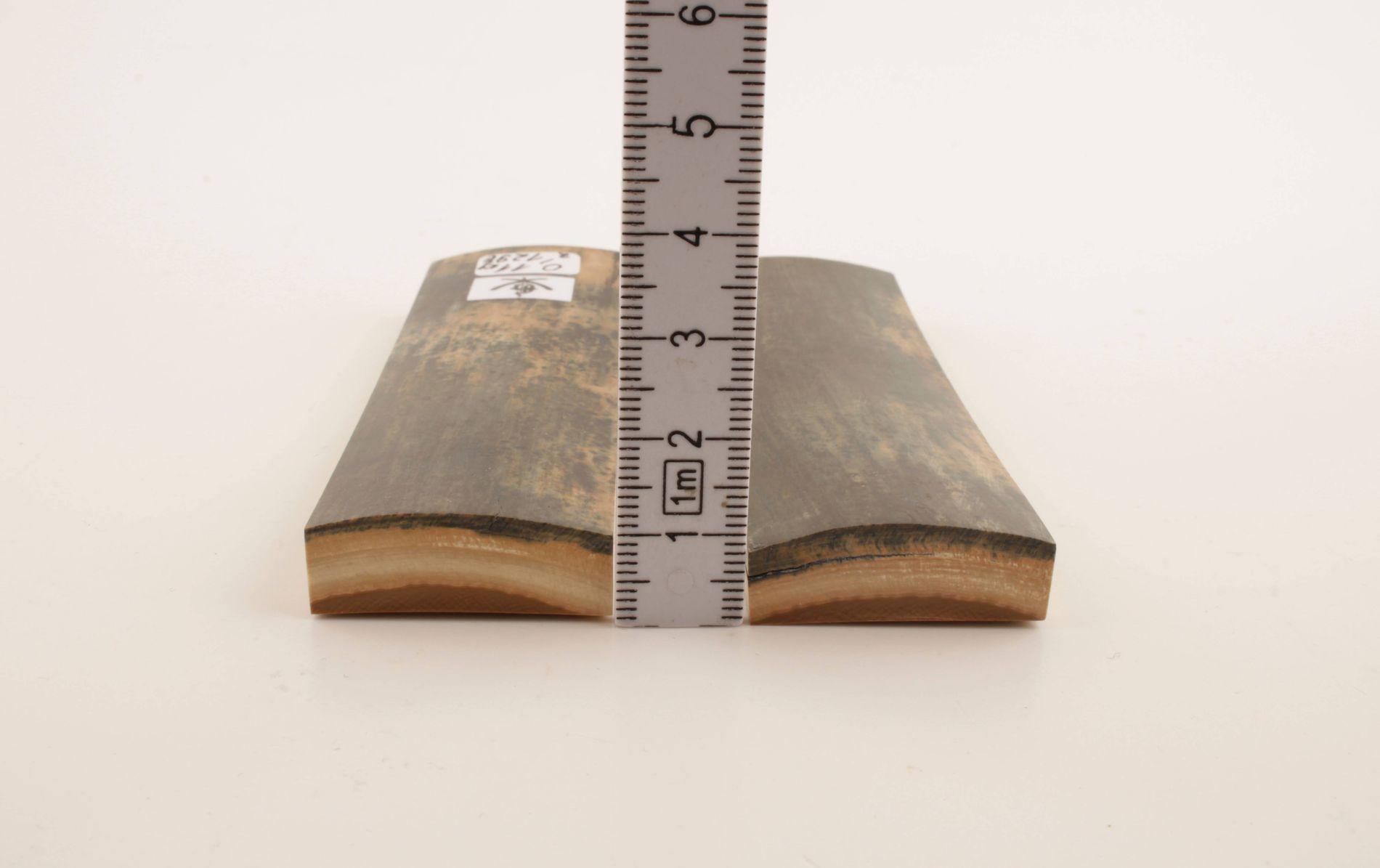 Natural blue mammoth bark scales