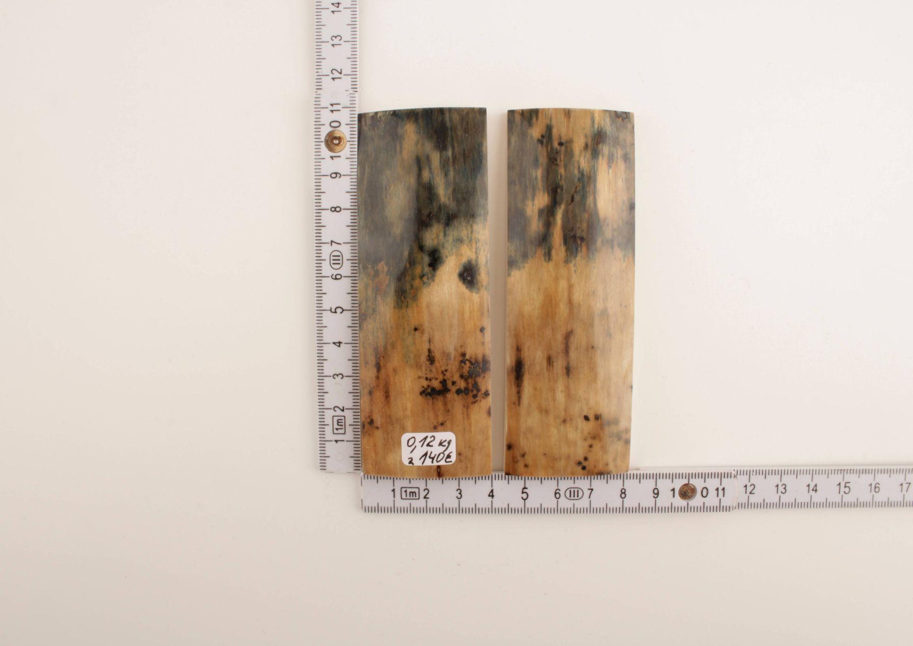 Beige-blue mammoth bark scales