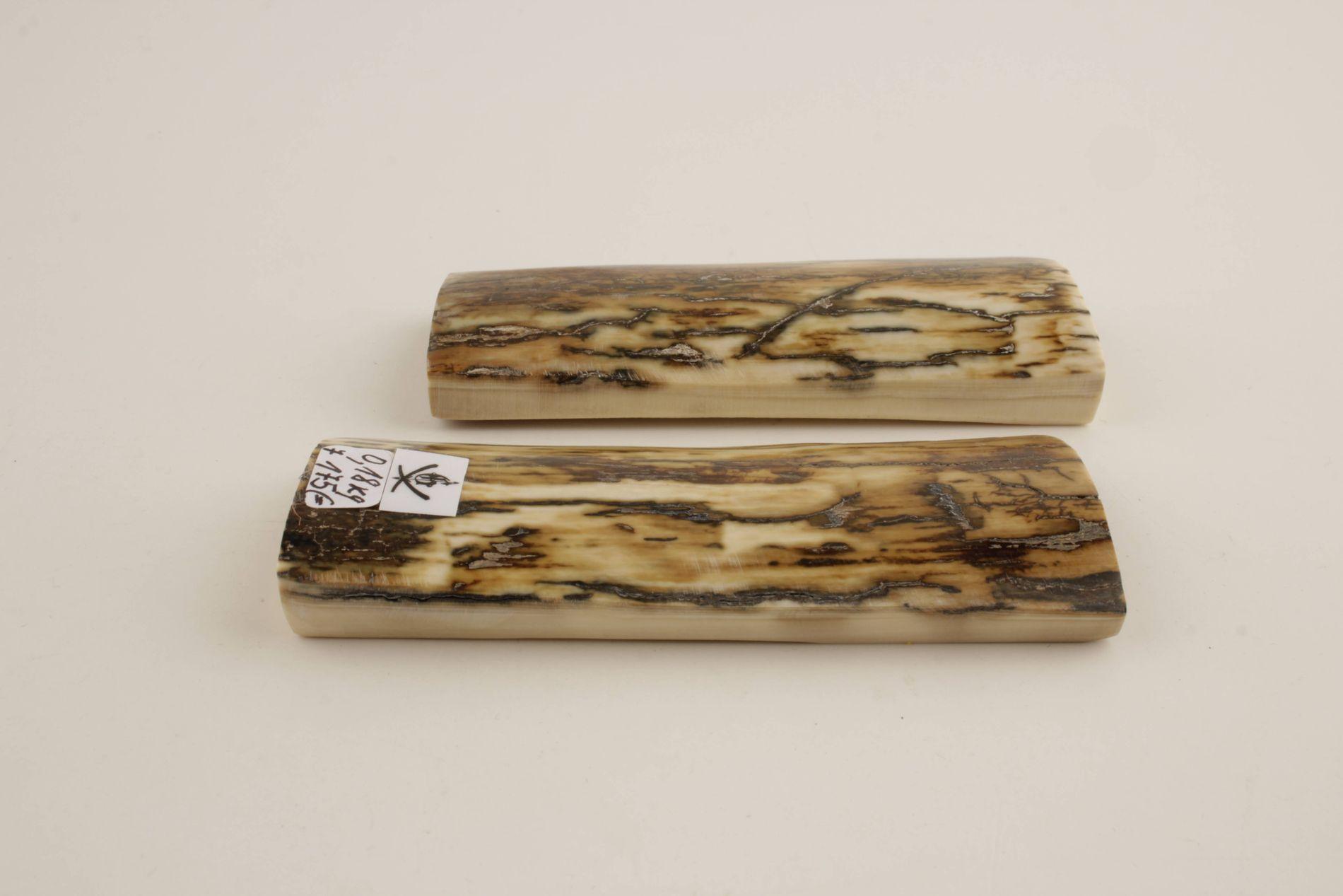 Beige-cream natural mammoth bark scales