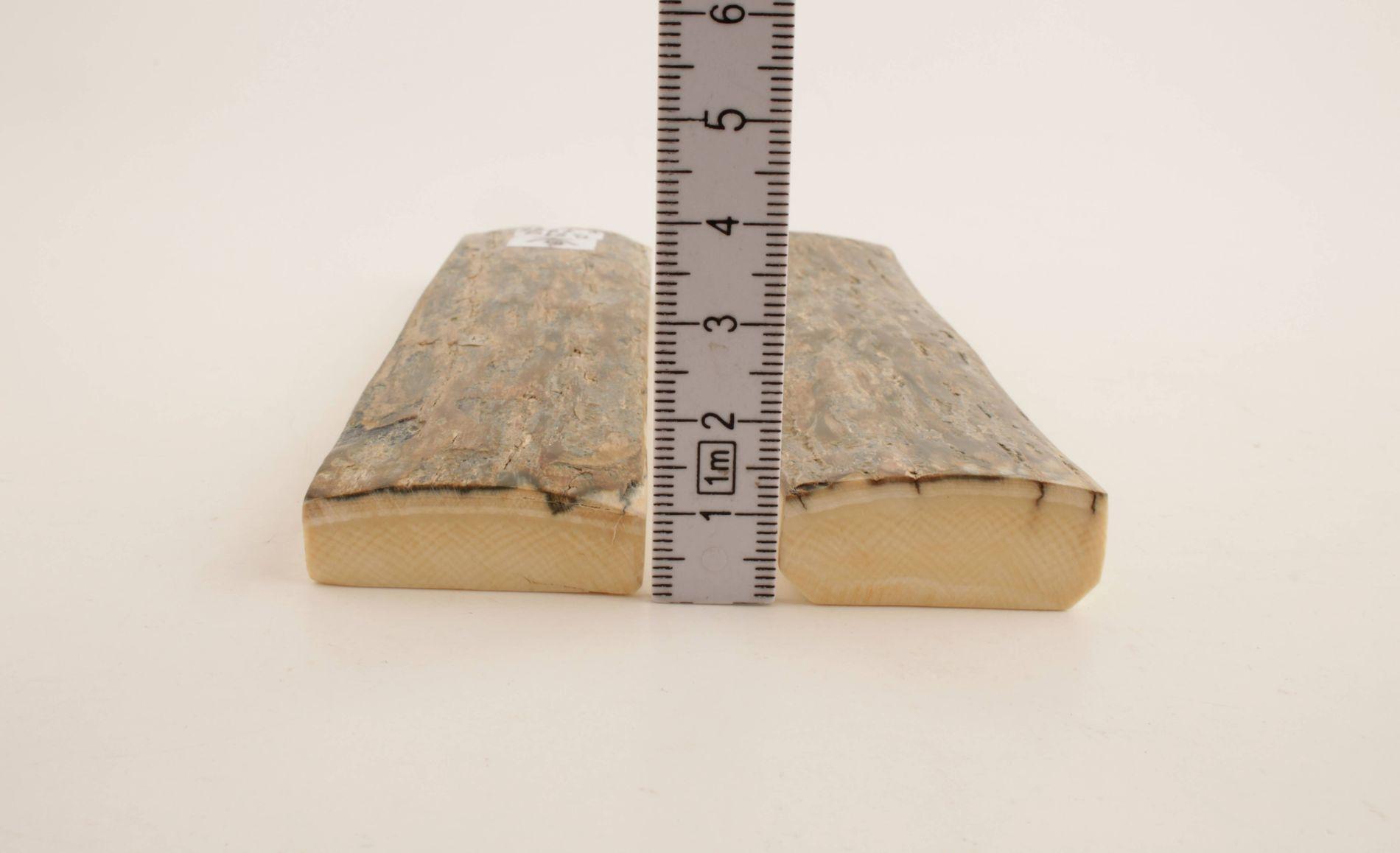 Grey-blue natural mammoth bark scales