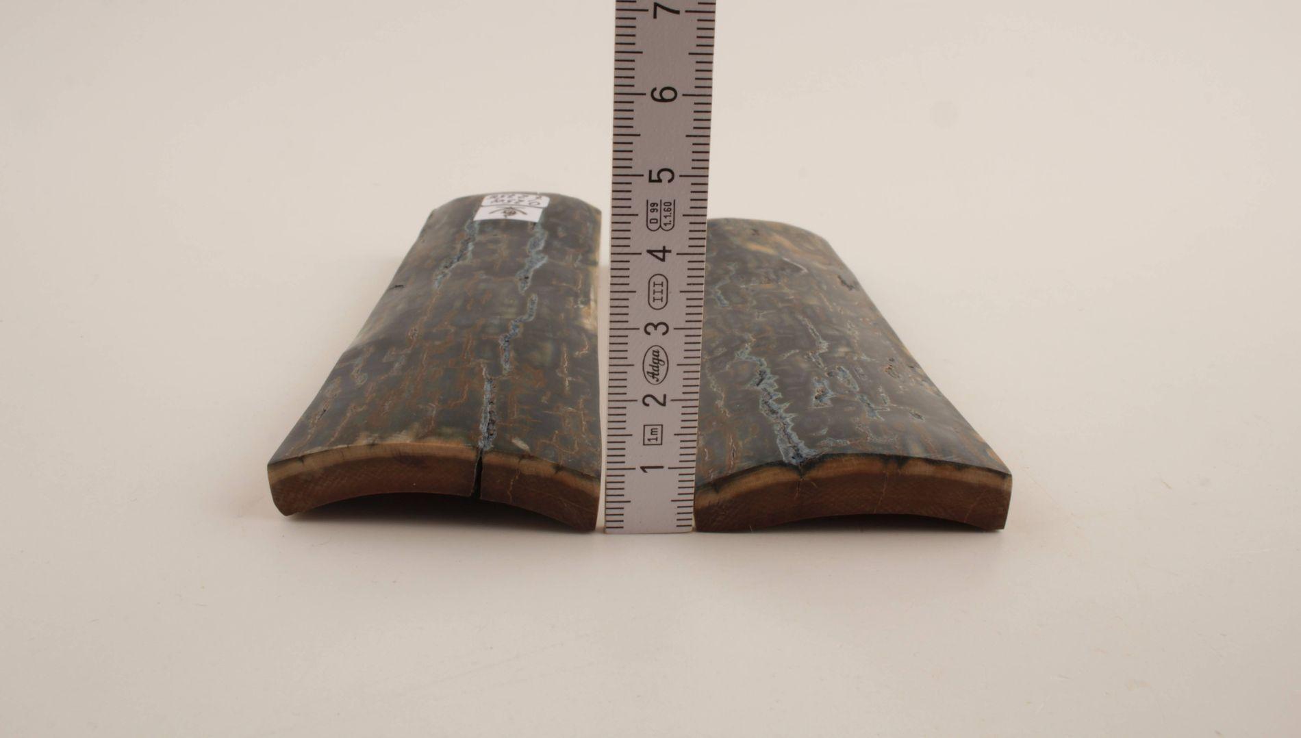 Blue natural mammoth bark scales