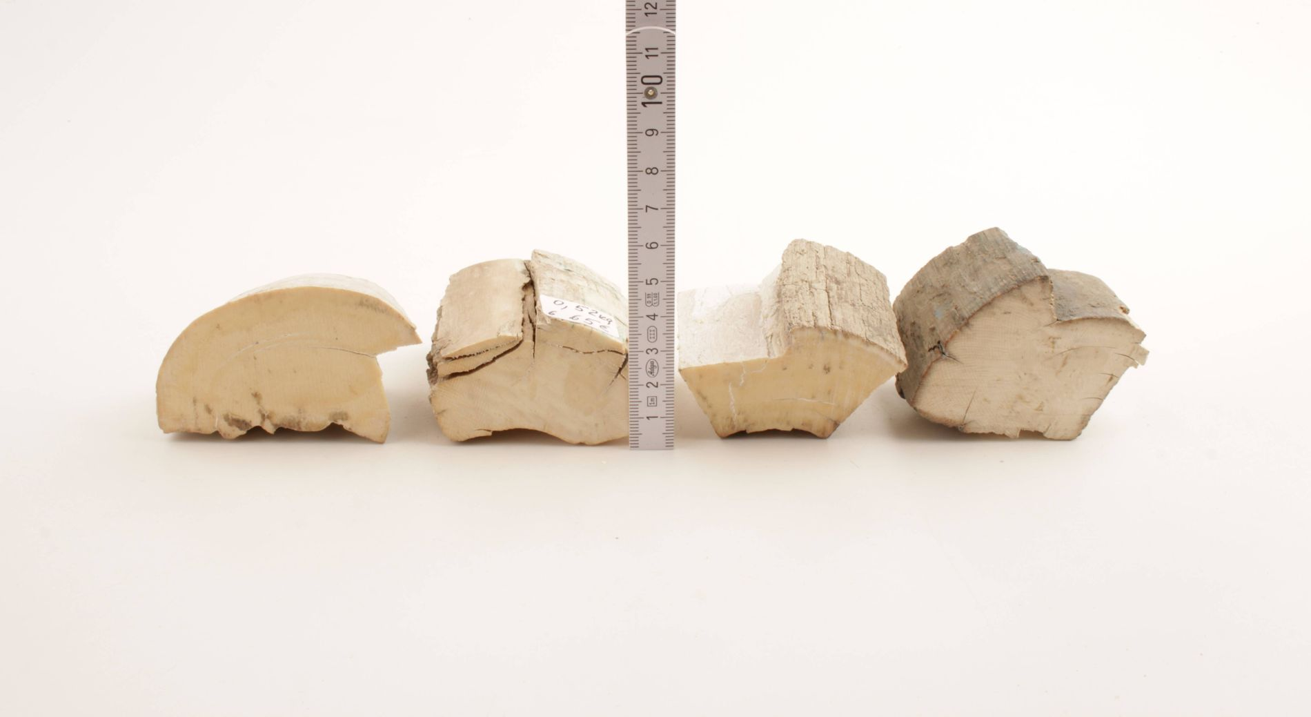 Untreated mammoth ivory pieces