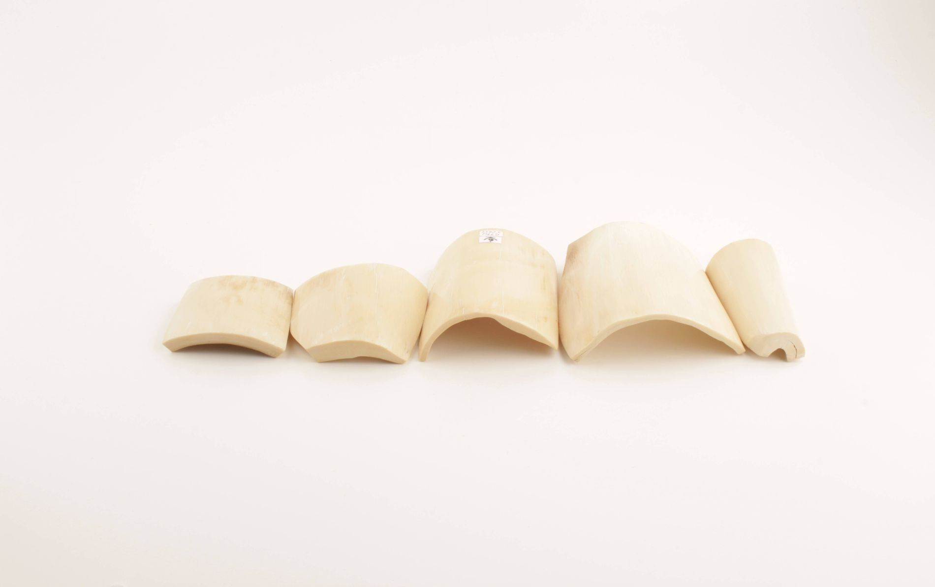 Cream-white mammoth ivory pieces