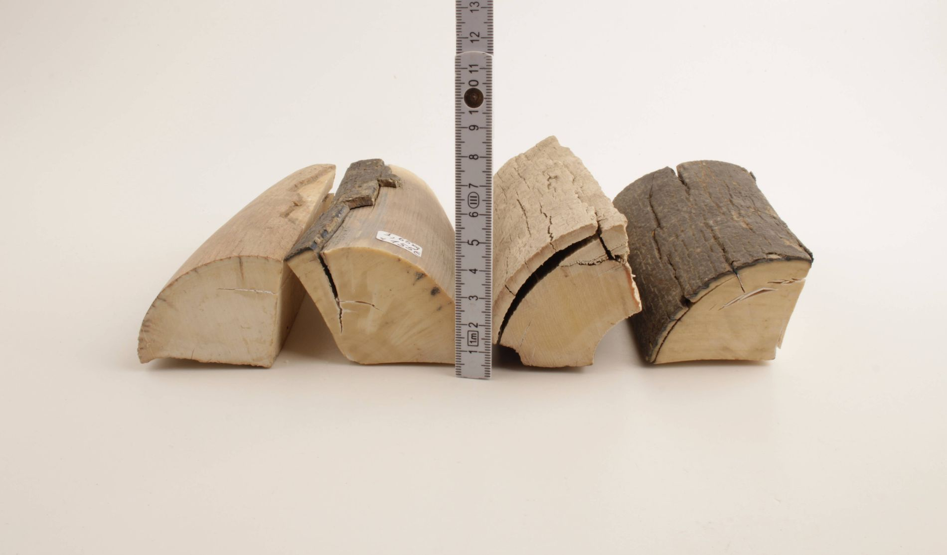 Untreated mammoth tusk offcuts