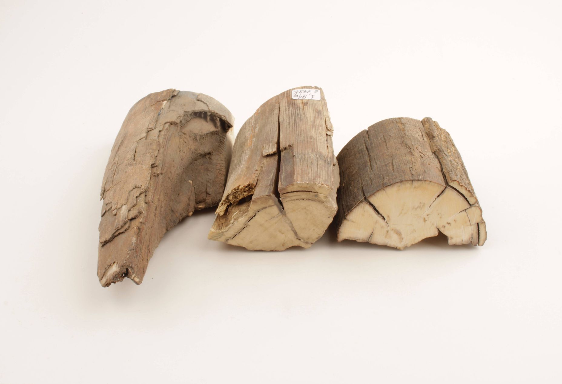 Raw woolly mammoth ivory pieces