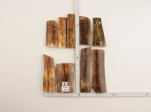 Brown-green mammoth bark pieces