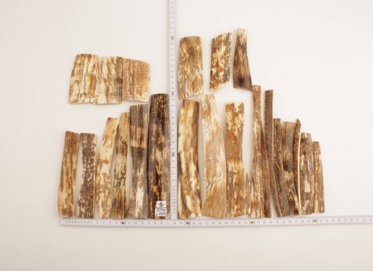 Natural woolly mammoth bark pieces