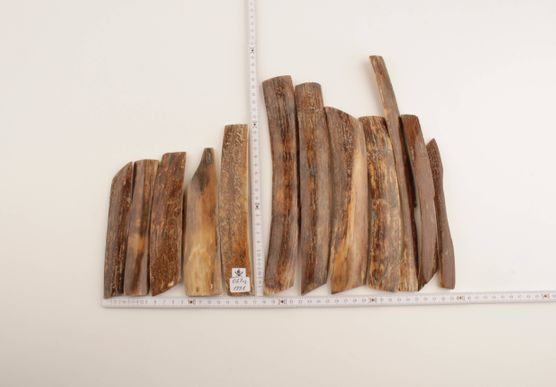 Brown woolly mammoth bark pieces
