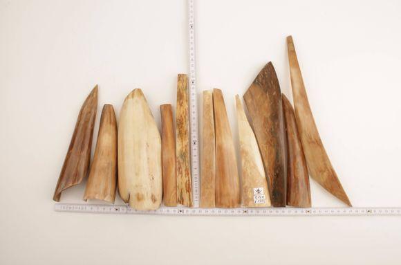 Beige-white mammoth bark pieces