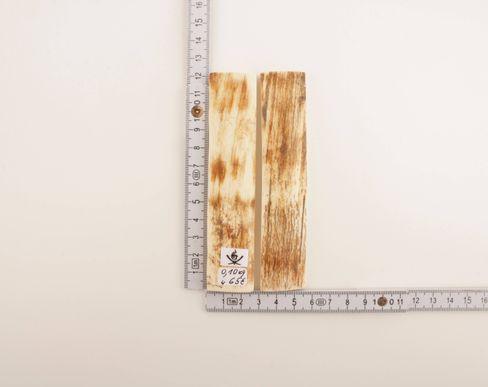 White-orange mammoth bark scales