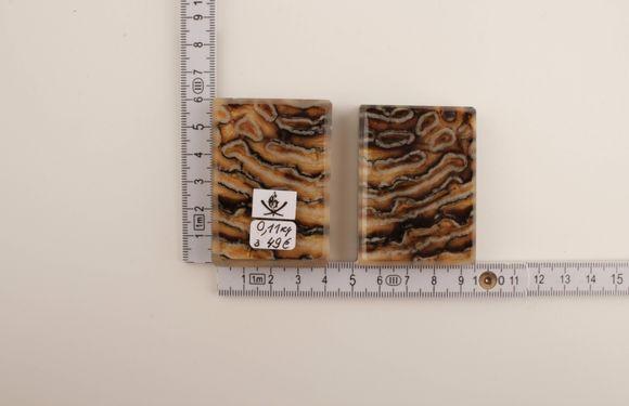 Beige-brown stabilized mammoth molar