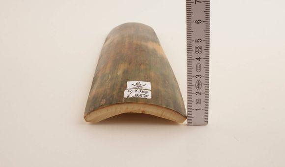 Green-brown mammoth bark