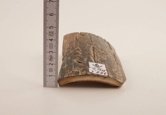 Brown mammoth bark