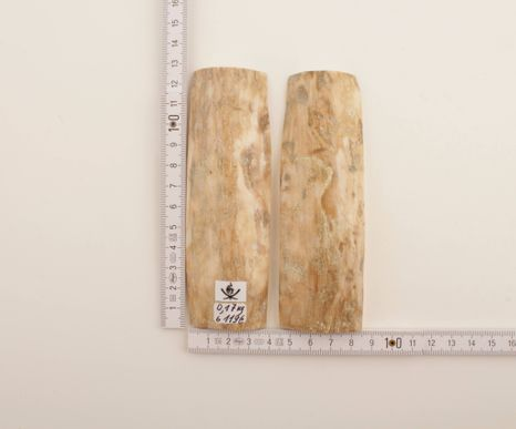 Natural beige mammoth bark scales