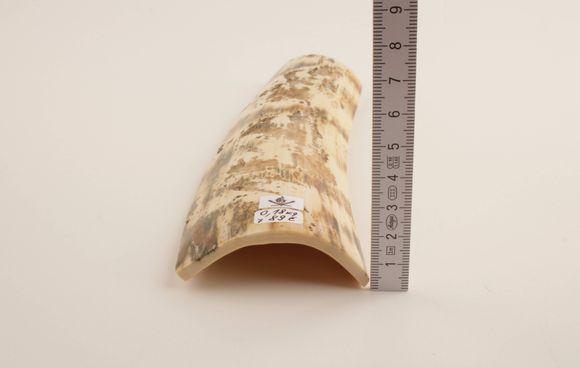 White-orange mammoth bark