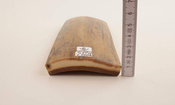 Beige mammoth bark