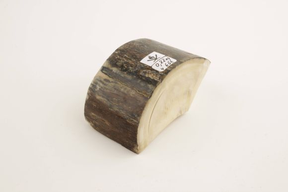Natural mammoth ivory piece