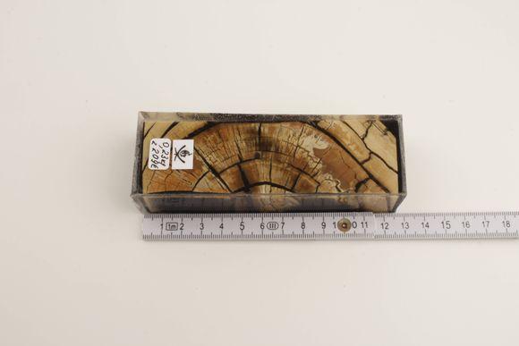 Brown-beige stabilised mammoth ivory block