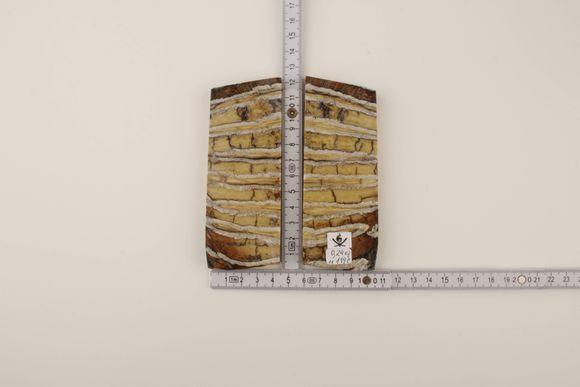 Yellow mammoth molar scales