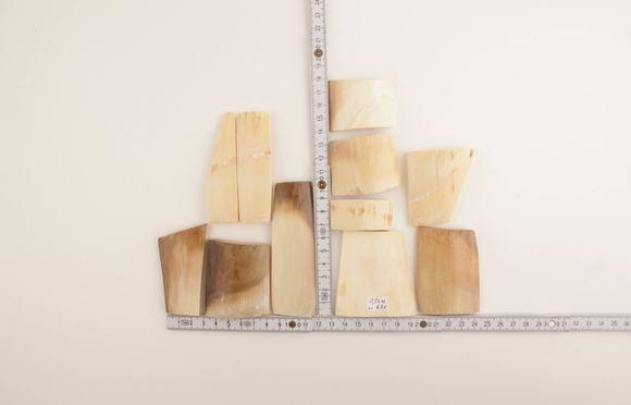 Beige-brown mammoth bark set