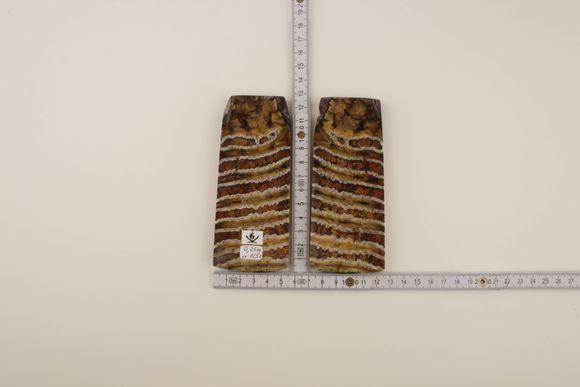 Beige-brown mammoth molar scales