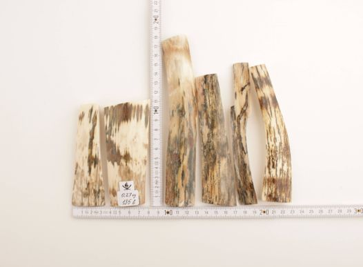 White-brown mammoth bark pieces