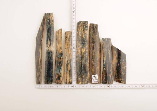 Blue-green mammoth bark
