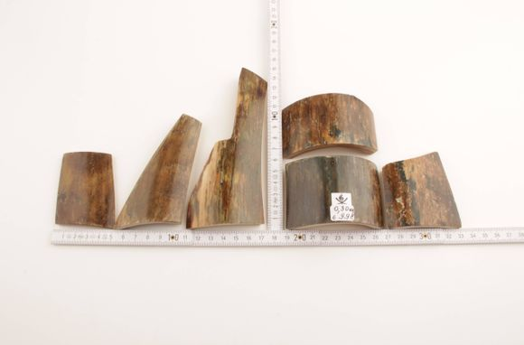 Brown-blue mammoth bark pieces