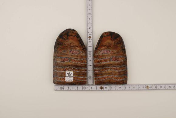 Beige-pink mammoth molar scales