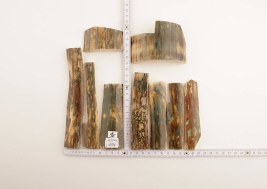 Green mammoth bark pieces
