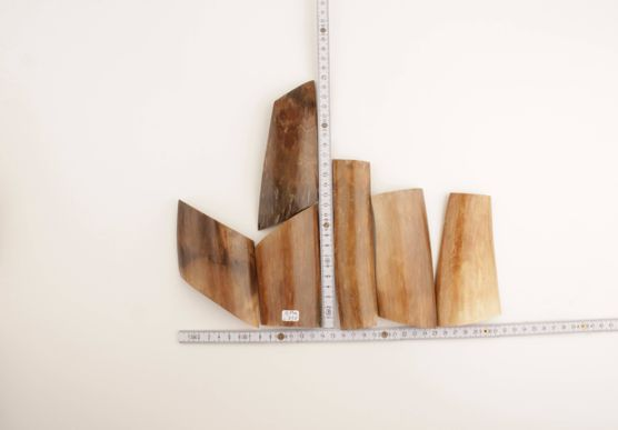 Beige-brown mammoth ivory pieces