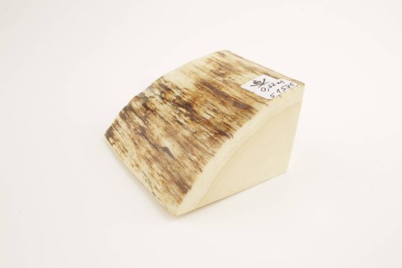Natural woolly mammoth ivory