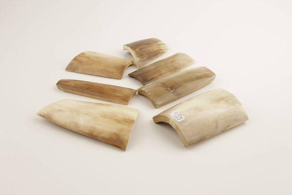 Beige-brown mammoth bark pieces