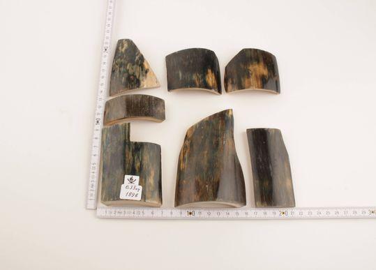 Blue-green mammoth bark pieces