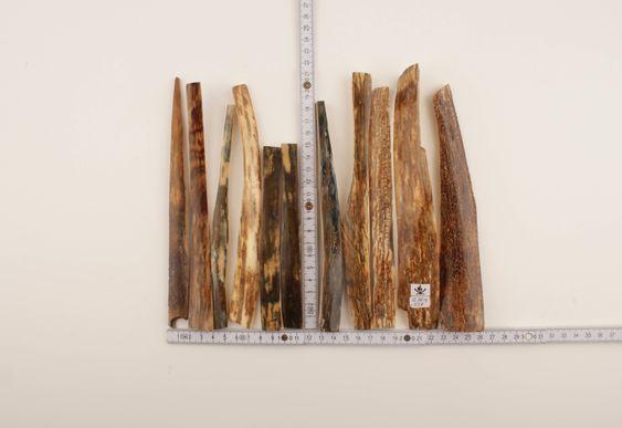 Brown-orange mammoth bark lot