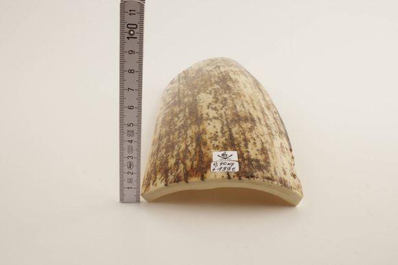 Beige-cream mammoth bark
