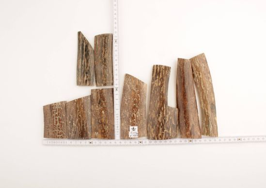 Brown mammoth bark pieces