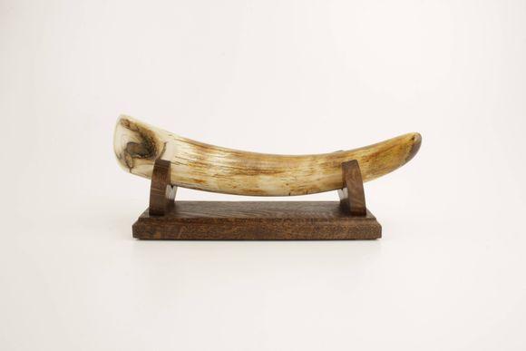 Restored woolly mammoth tusk tip
