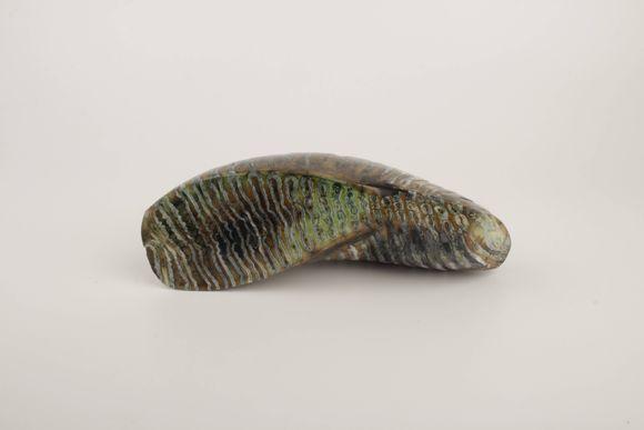 Green-brown stabilized mammoth molar